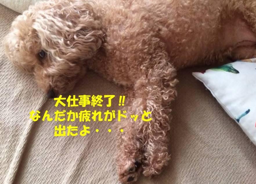 f:id:nanachan59:20180914174548j:plain