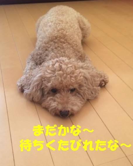 f:id:nanachan59:20180921215545j:plain