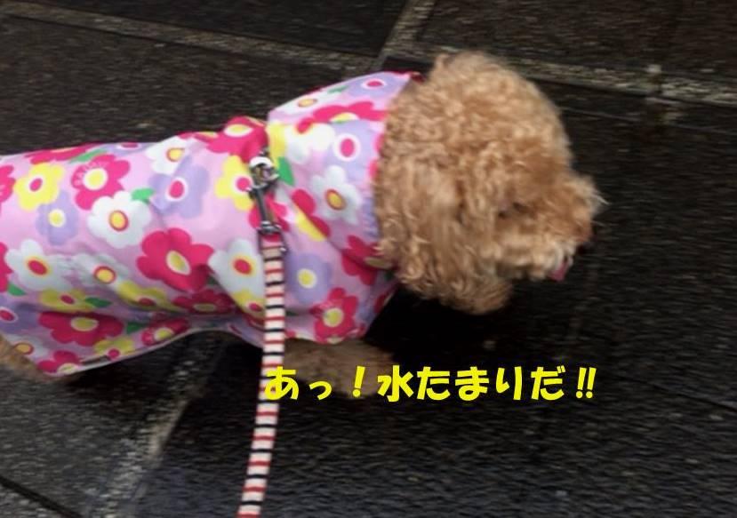 f:id:nanachan59:20180921215903j:plain