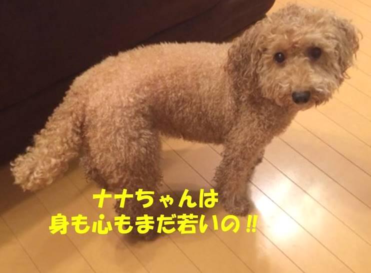 f:id:nanachan59:20180921220314j:plain