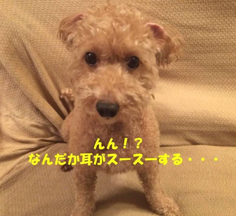 f:id:nanachan59:20180924174631j:plain