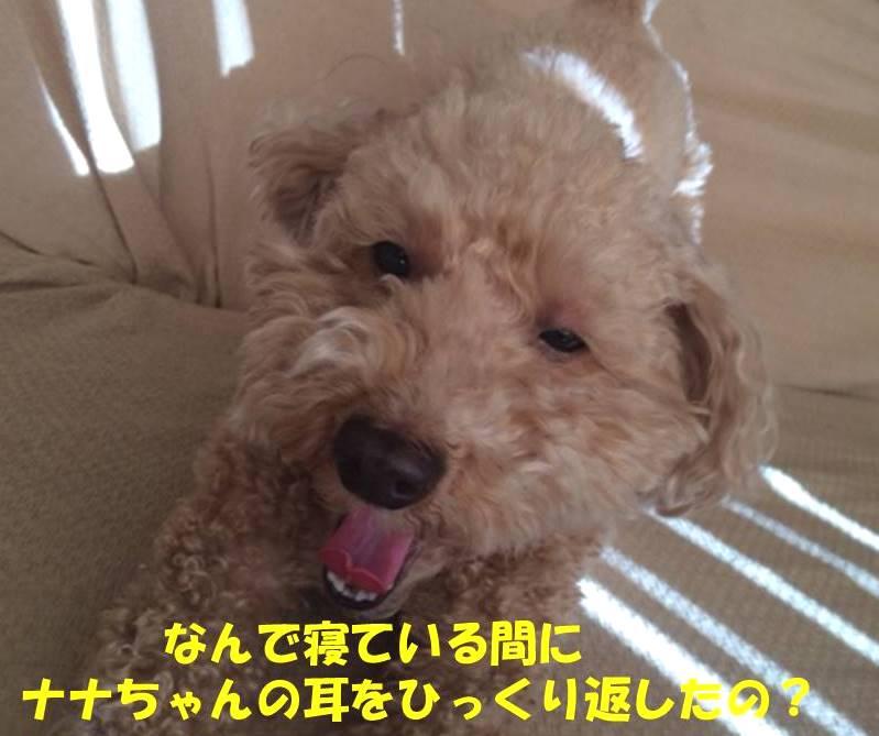 f:id:nanachan59:20180924175413j:plain