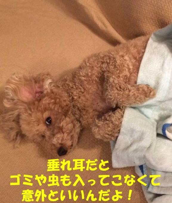 f:id:nanachan59:20180924180203j:plain