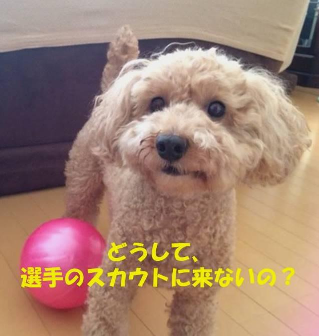 f:id:nanachan59:20180930004026j:plain