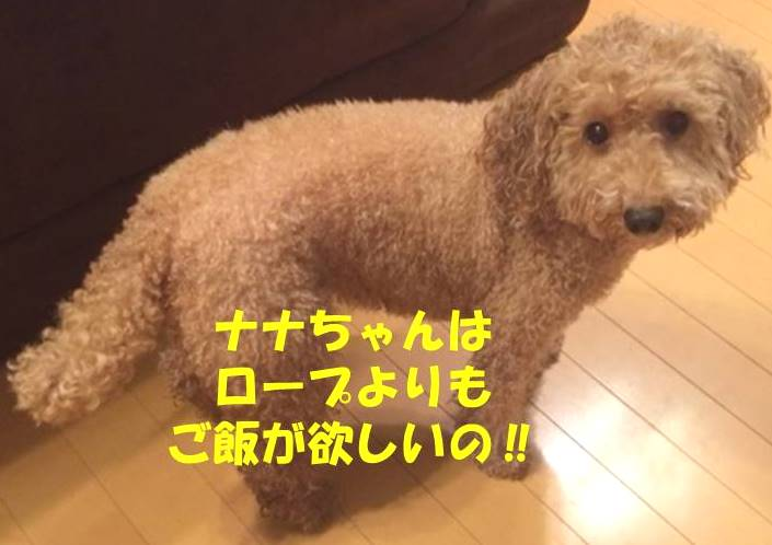 f:id:nanachan59:20181003181600j:plain