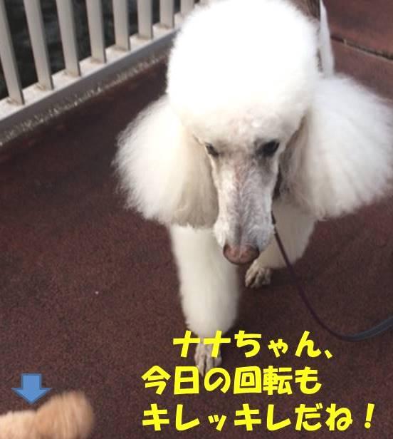 f:id:nanachan59:20181006172231j:plain