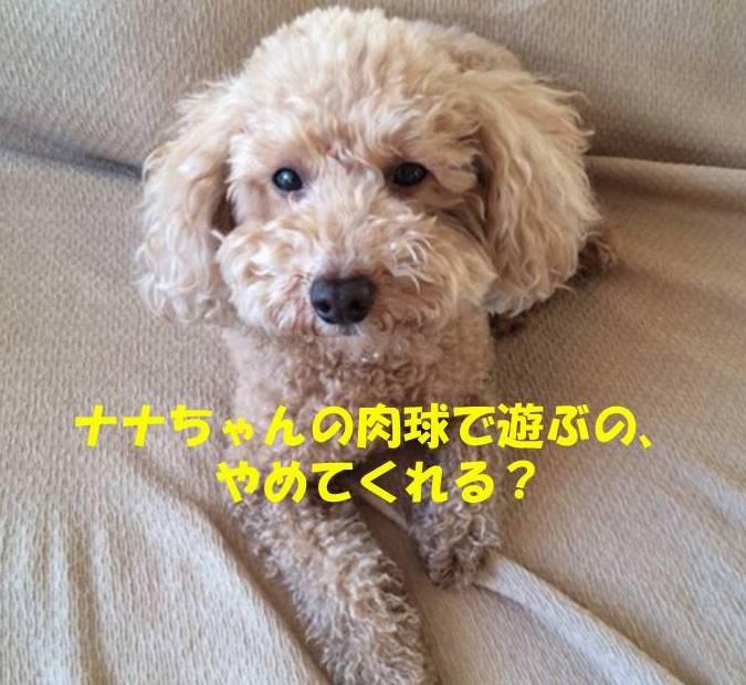 f:id:nanachan59:20181008203250j:plain