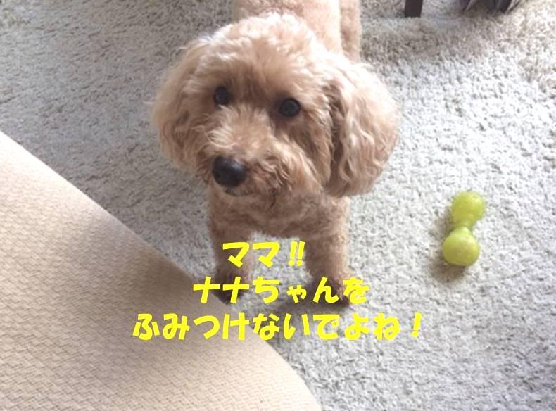 f:id:nanachan59:20181013191355j:plain