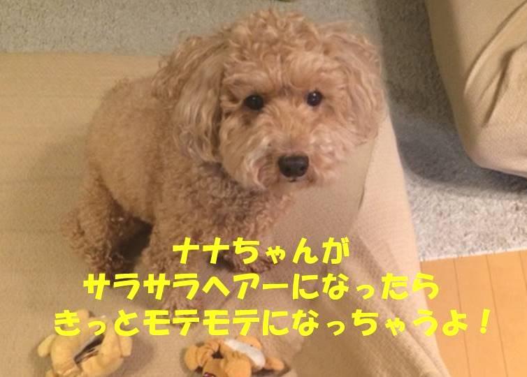 f:id:nanachan59:20181013192719j:plain