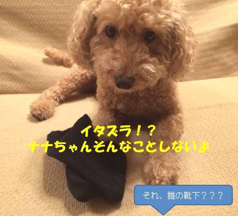 f:id:nanachan59:20181016175826j:plain