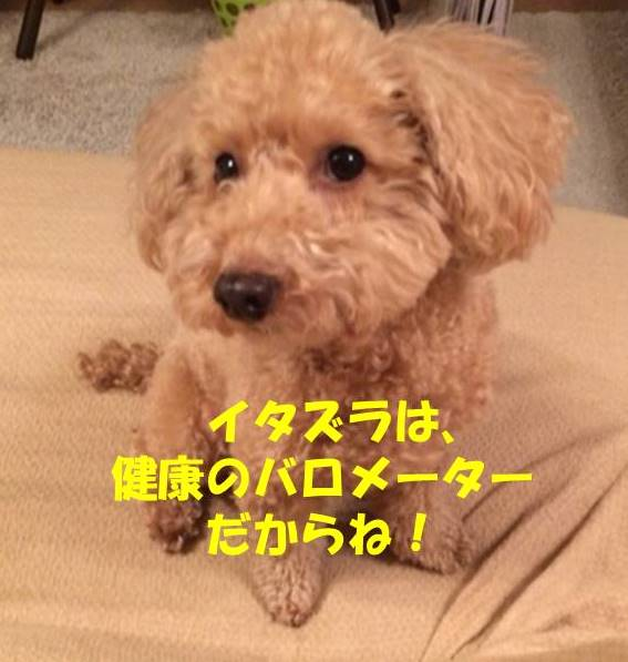 f:id:nanachan59:20181016201856j:plain