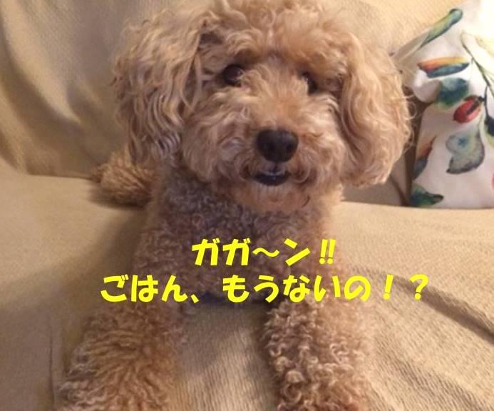 f:id:nanachan59:20181020220128j:plain
