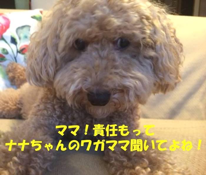f:id:nanachan59:20181020221213j:plain