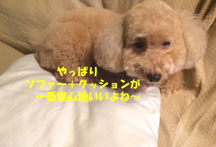 f:id:nanachan59:20181023192919j:plain