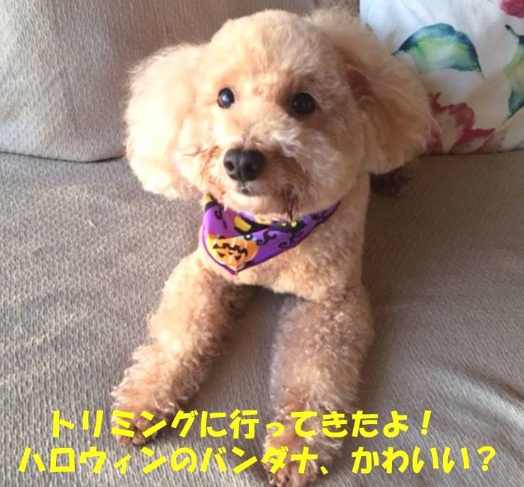 f:id:nanachan59:20181025182137j:plain