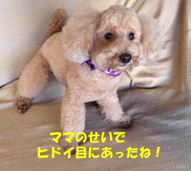 f:id:nanachan59:20181026205438j:plain
