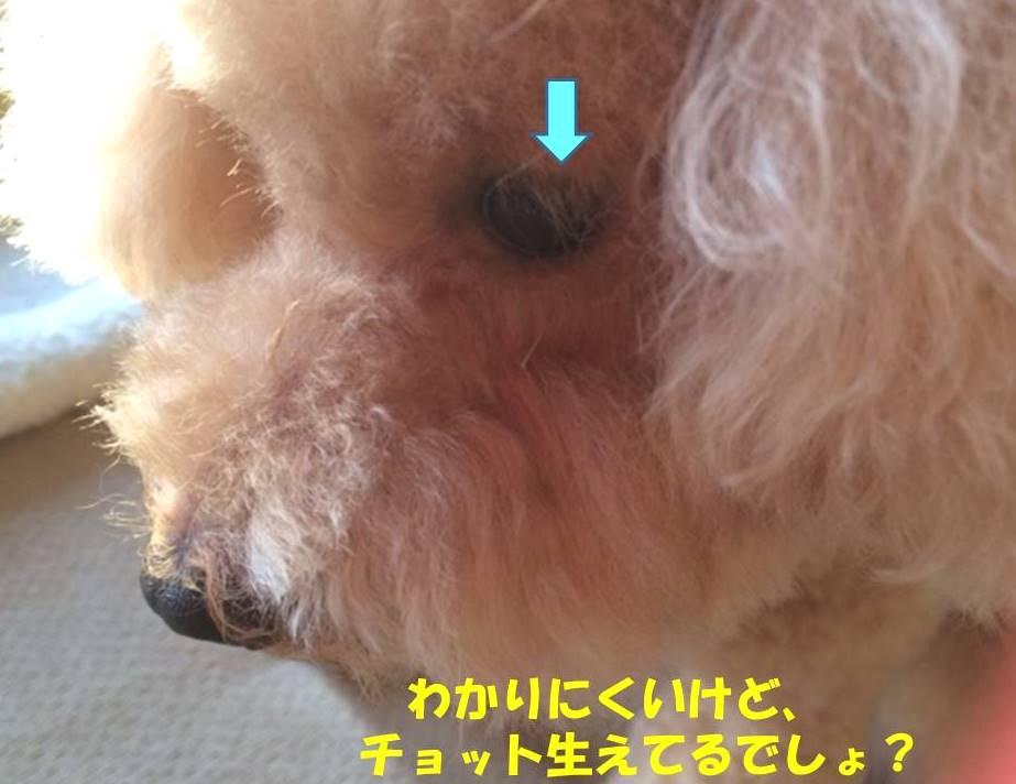f:id:nanachan59:20181026210043j:plain