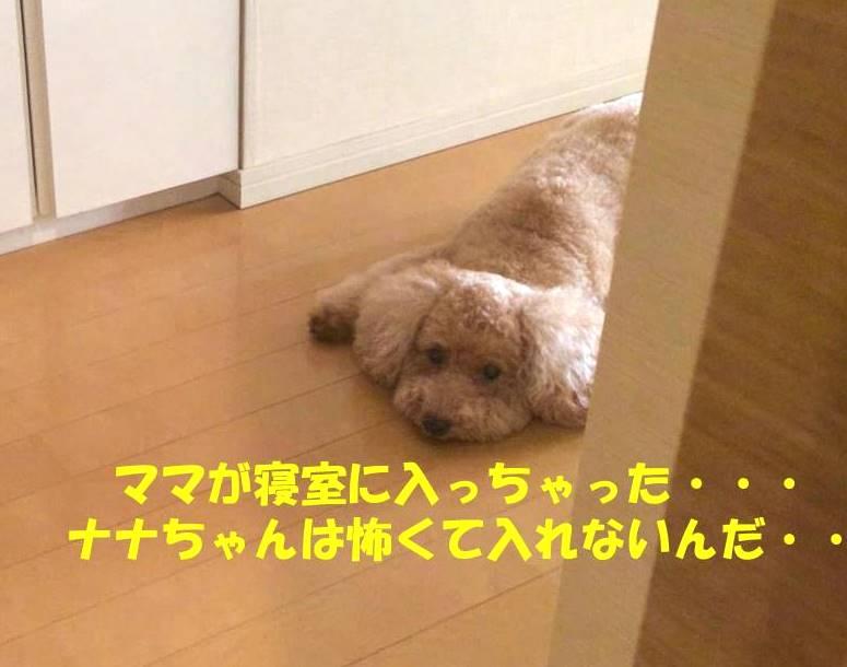 f:id:nanachan59:20181102180932j:plain