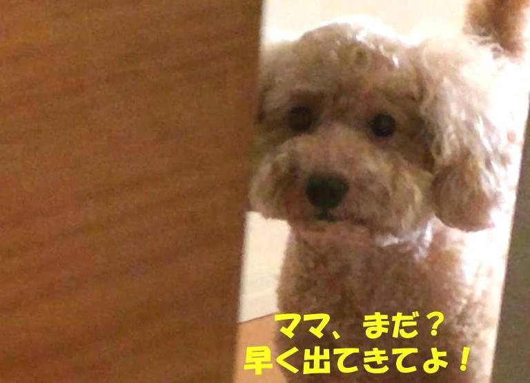f:id:nanachan59:20181102181457j:plain