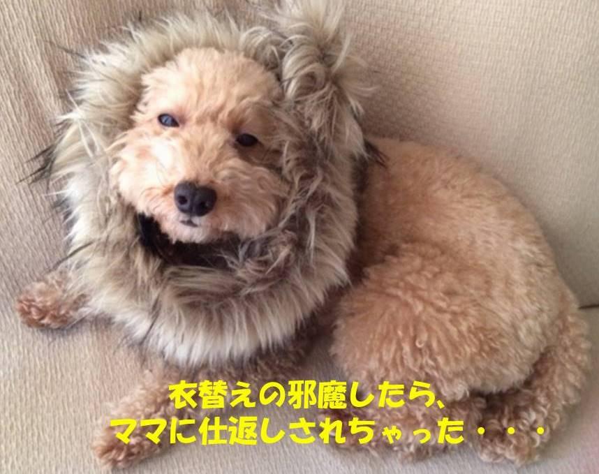 f:id:nanachan59:20181107204752j:plain