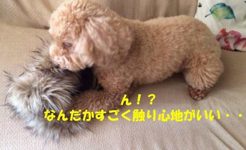 f:id:nanachan59:20181107205843j:plain