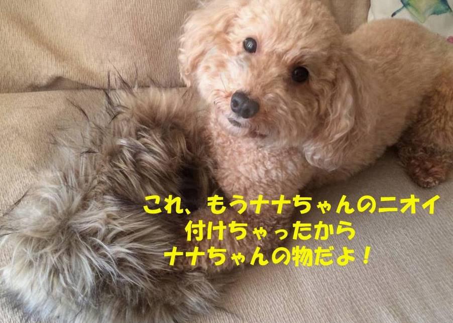 f:id:nanachan59:20181107210824j:plain