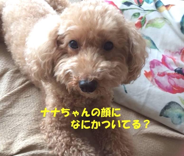 f:id:nanachan59:20181111174507j:plain