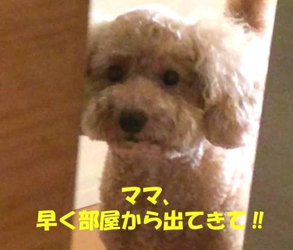 f:id:nanachan59:20181111175227j:plain