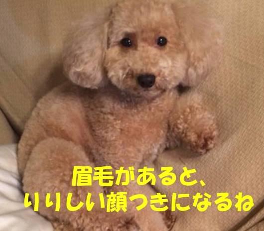 f:id:nanachan59:20181111204951j:plain