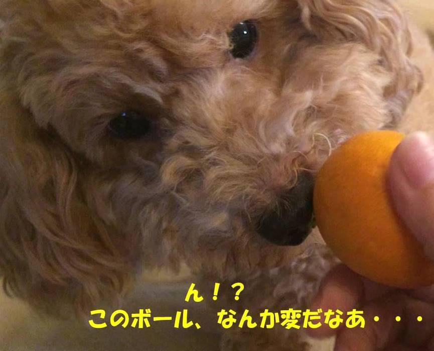 f:id:nanachan59:20181115210427j:plain