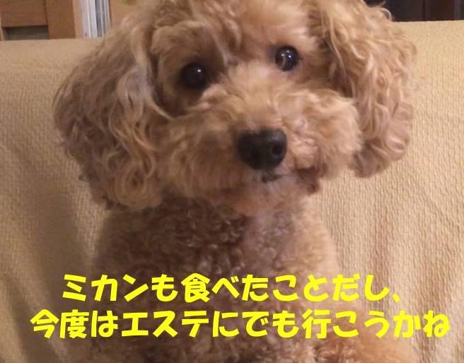 f:id:nanachan59:20181115215414j:plain