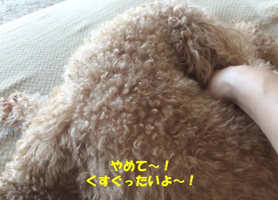 f:id:nanachan59:20181118212721j:plain