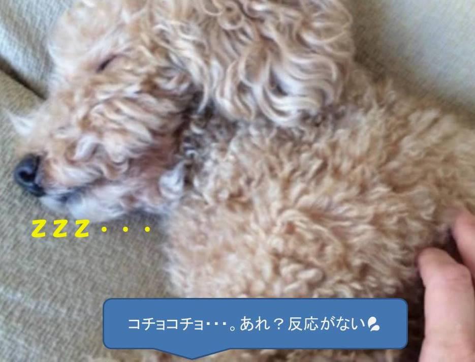 f:id:nanachan59:20181118213536j:plain