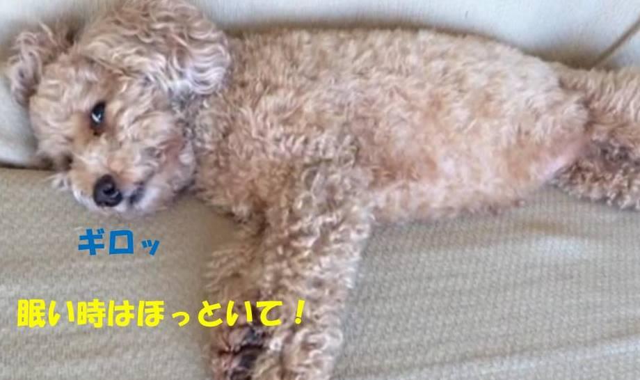 f:id:nanachan59:20181118214034j:plain
