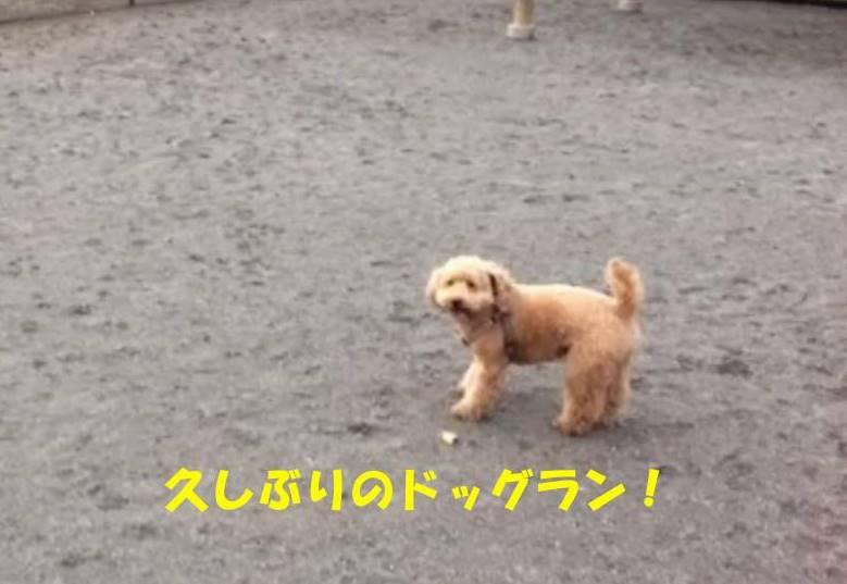 f:id:nanachan59:20181122200909j:plain