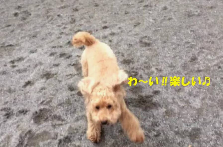 f:id:nanachan59:20181122201343j:plain