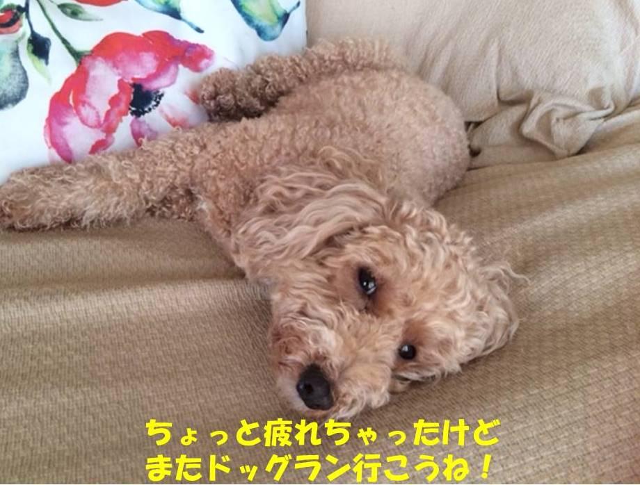 f:id:nanachan59:20181122202341j:plain