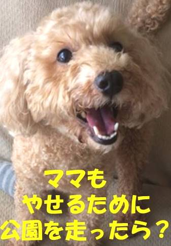 f:id:nanachan59:20181122221529j:plain