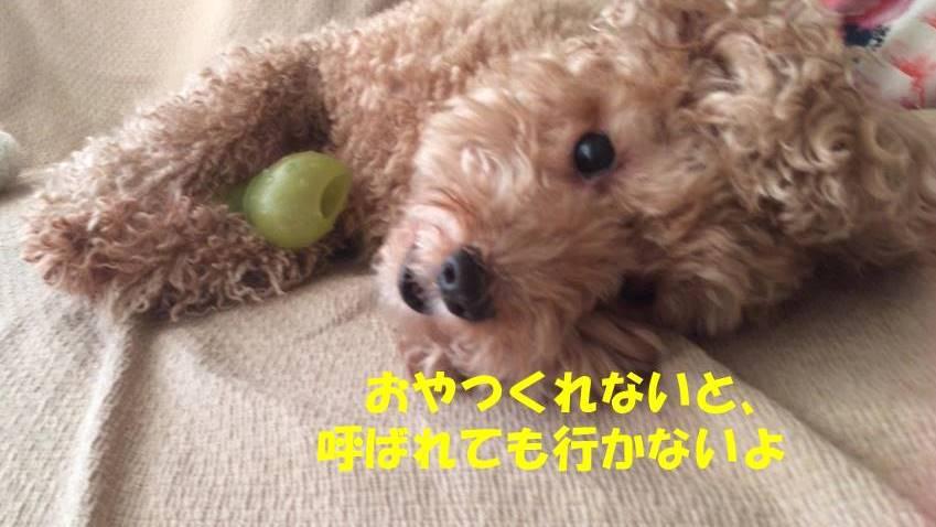 f:id:nanachan59:20181125175241j:plain