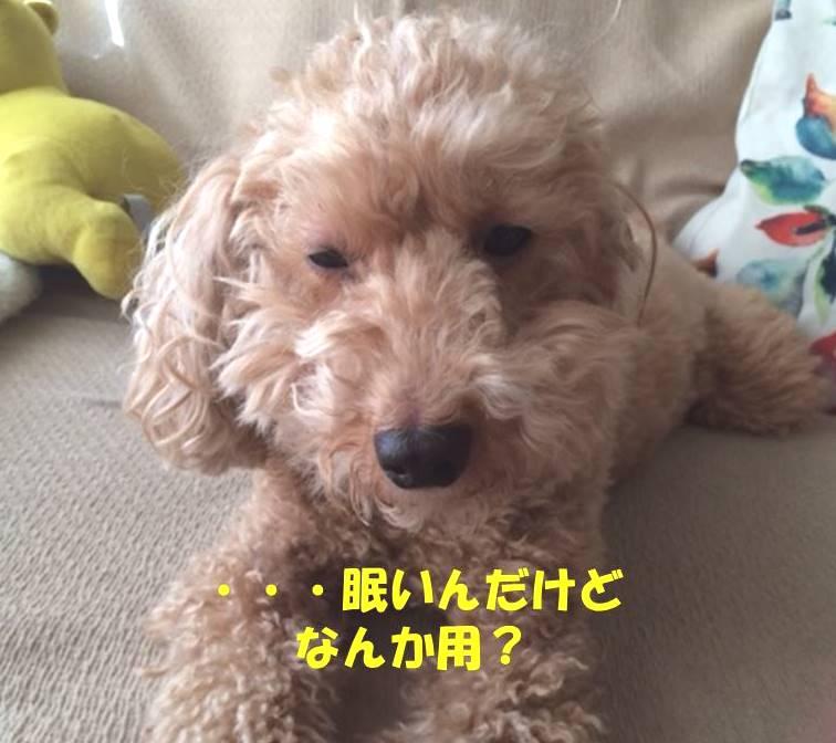 f:id:nanachan59:20181128174710j:plain