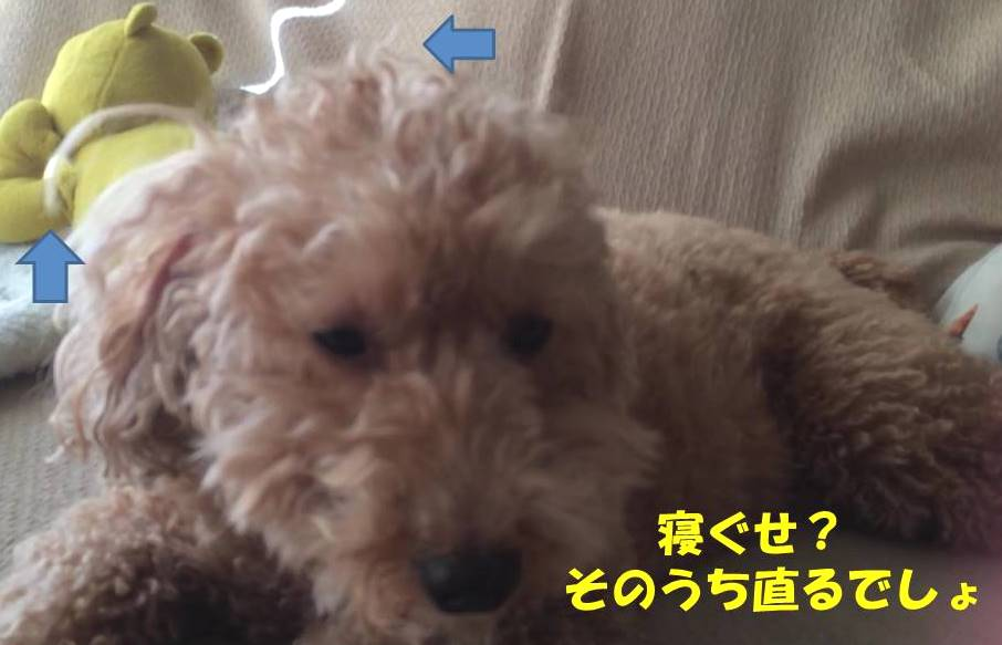 f:id:nanachan59:20181128180104j:plain