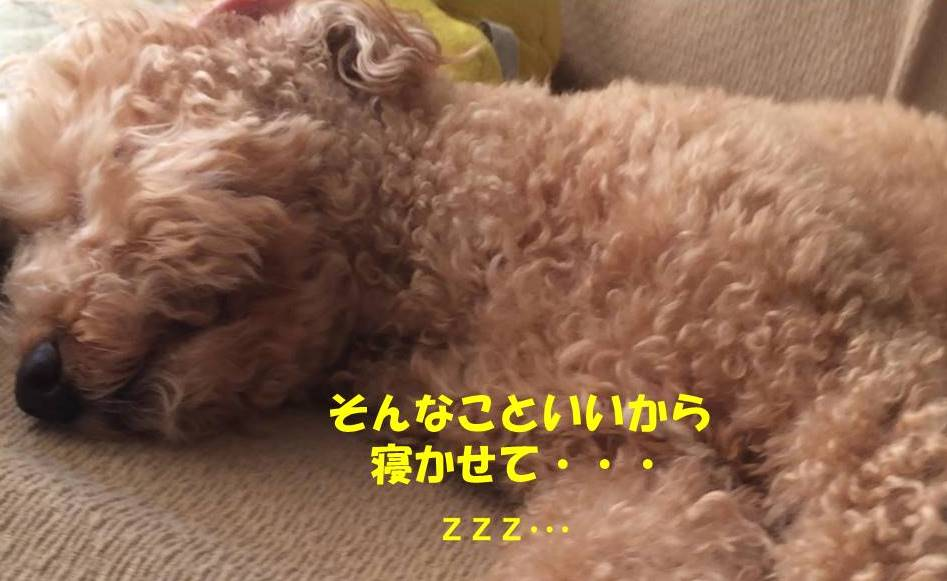 f:id:nanachan59:20181128180815j:plain
