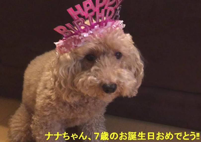 f:id:nanachan59:20181201171826j:plain