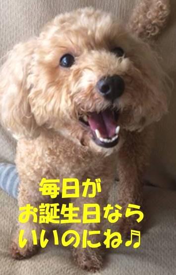 f:id:nanachan59:20181201173033j:plain