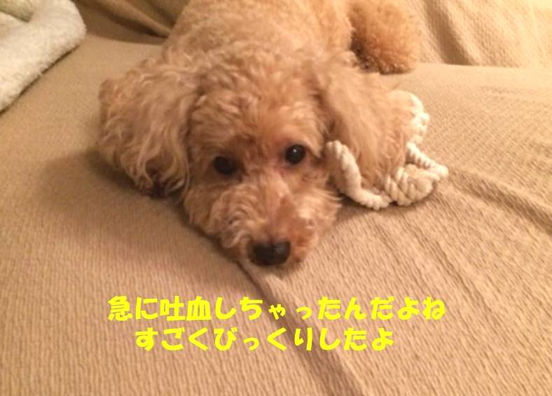 f:id:nanachan59:20181214204535j:plain