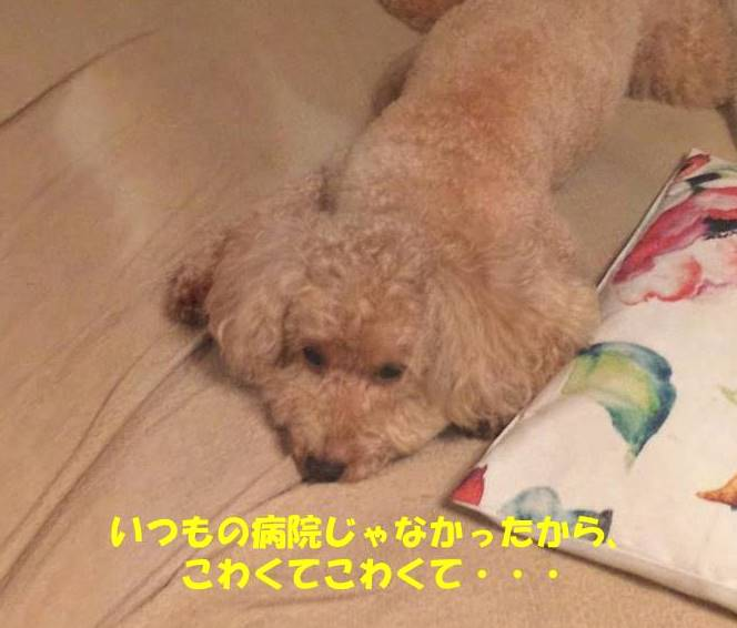 f:id:nanachan59:20181214205516j:plain