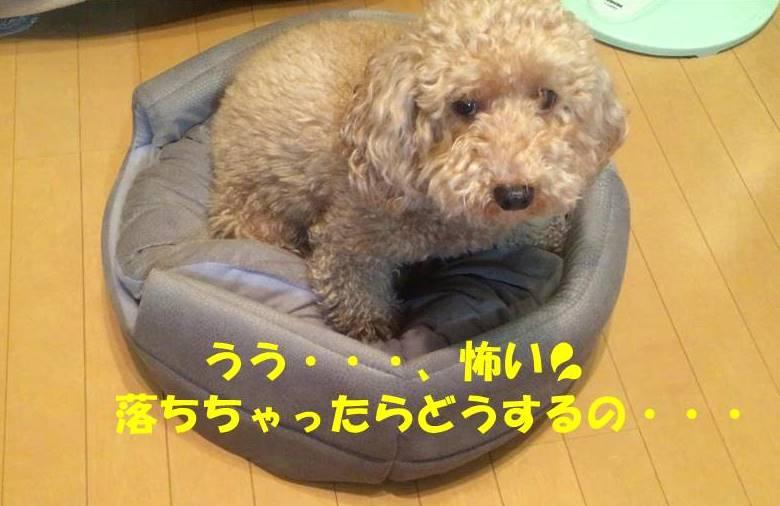 f:id:nanachan59:20181218174303j:plain