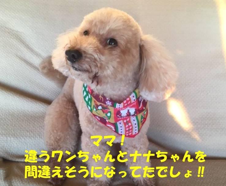 f:id:nanachan59:20181221175412j:plain