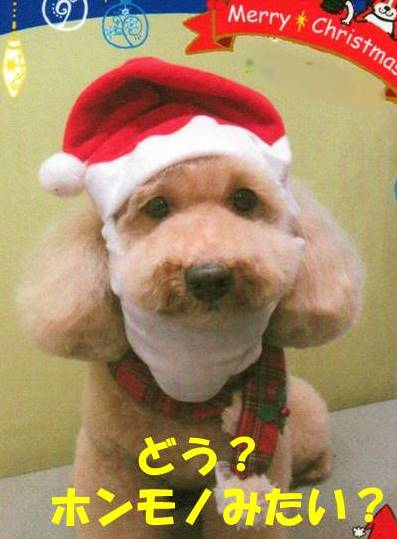 f:id:nanachan59:20181221180426j:plain