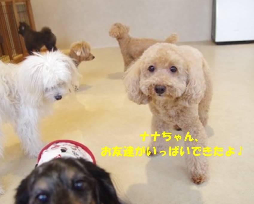 f:id:nanachan59:20181228203015j:plain